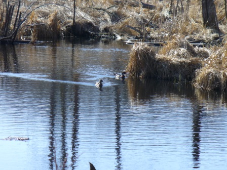 Woodies on the Pond