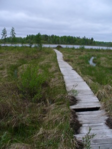 A Beaver Boardwalk